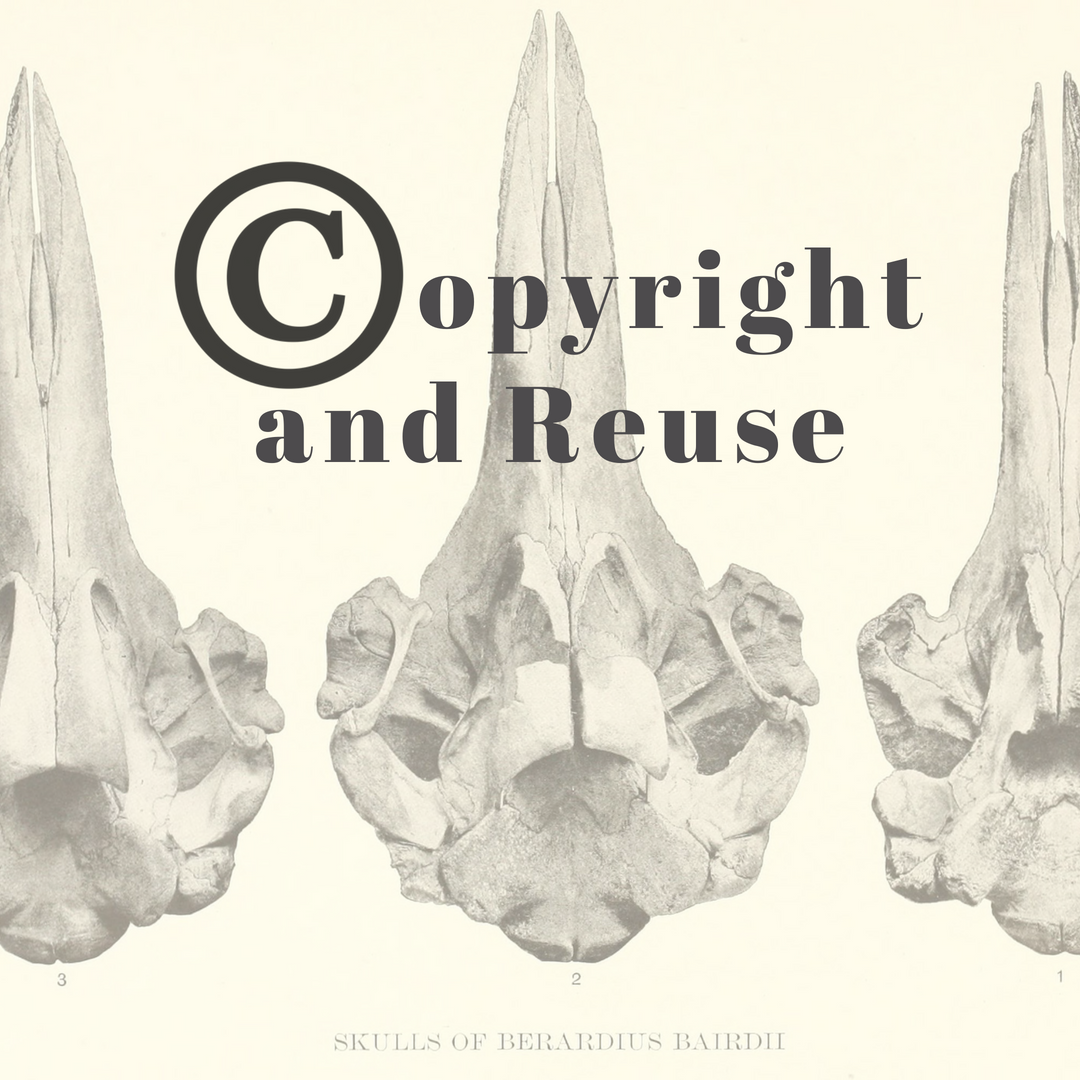 Copyright and Reuse