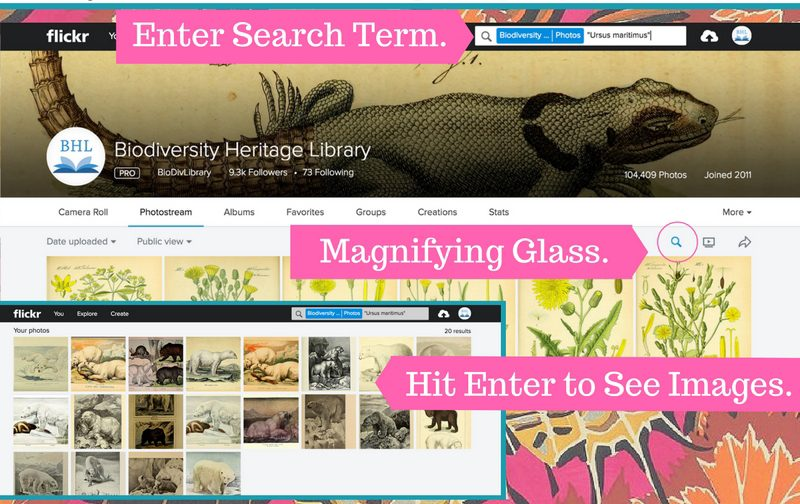 instructions on how to search the BHL Flickr
